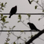 Birds_on_Electrical_Wire