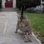 Neighborhood_Cat