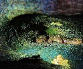 Can You Find Green Salamanders? A Community Searches in the Appalachians