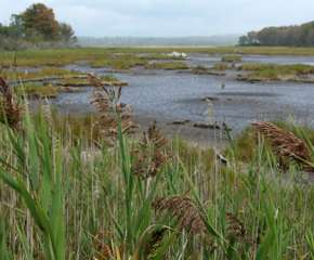Exploring Wells National Estuarine Research Reserve