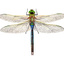 LMundy_VFB green darner