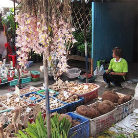 Illegal Trade Reveals Unknown Orchids