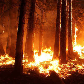 Wildfires and Wild Lives