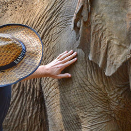 Touched by an Elephant, Part 3