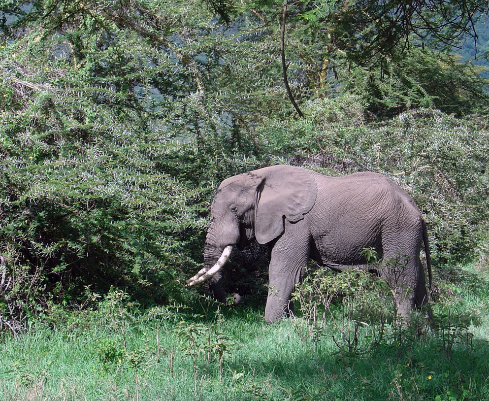 Critical Time for Elephants 2