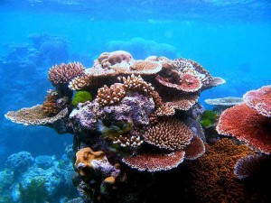Diverse and colorful corals